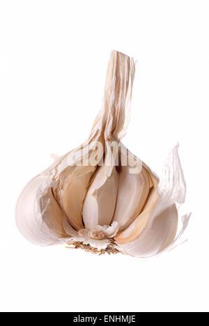 One open garlic close up, white background. - Stock Image