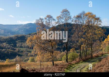 Woodland Trust reserve at Glen Finglas in Loch Lomond and the Trossacks National Park Scotland - Stock Image