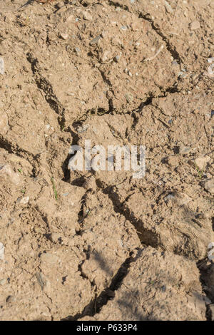 Deep cracks in water parched soil of cropped area - metaphor for drought, crop failure, crop losses, famine, heatwave concept, heatwave crops. - Stock Image