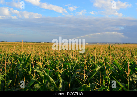 Irrigation of corn field with water jet in Charente Marime, France - Stock Image