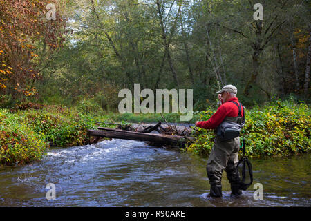 A fly fisherman casting for searun cutthroat trout on Chambers Creek in Tacoma, Washington USA - Stock Image