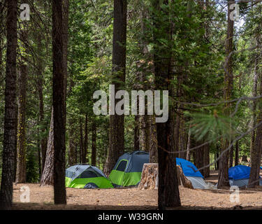 Tents set in t a Sierra Nevada campground, California, among pine trees, in the summer, photographed during the day and viewed from a distance - Stock Image
