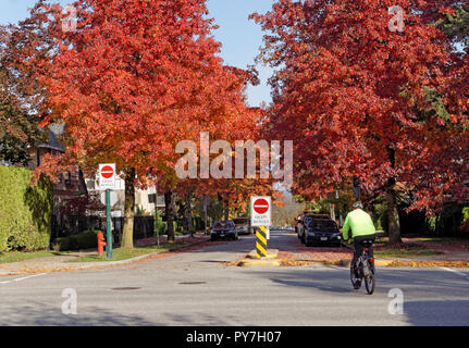 Cyclist in an urban bicycle lane with colorful fall foliage, Vancouver, BC, Canada - Stock Image