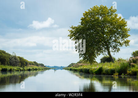 the beautiful reflection of a tree in the wetland near saint lyphard - Stock Image