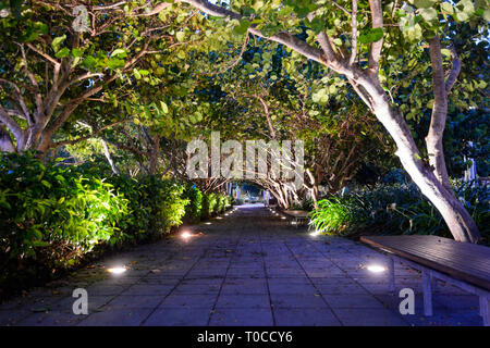 Illuminated arched trees forming a tunnel in town centre in the evening, Cairns, Far North Queensland, FNQ, QLD, Australia - Stock Image