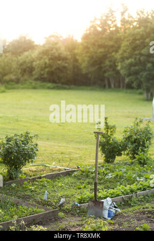 A shovel in a garden at sunset. - Stock Image