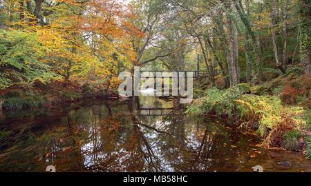 Autumn along the river Teign near Drewsteignton Devon Uk - Stock Image