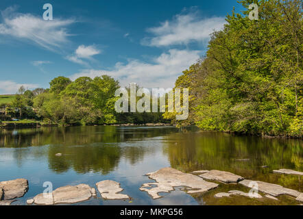 Teesdale landscape, spring morning on the river Tees, Wycliffe, County Durham, UK with wooded riverbanks coming into leaf reflected in the water - Stock Image