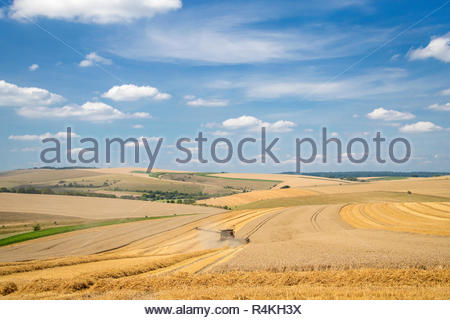 Harvest landscape view of combine harvester cutting summer wheat field crop and blue sky on farm - Stock Image