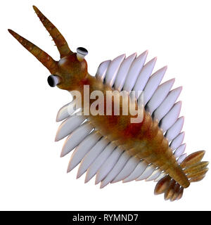 Cambrian Anomalocaris - Anomalocaris was a marine carnivorous fish that lived in the seas of the Cambrian Period. - Stock Image