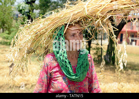 Rural woman carrying animal silage - Stock Image