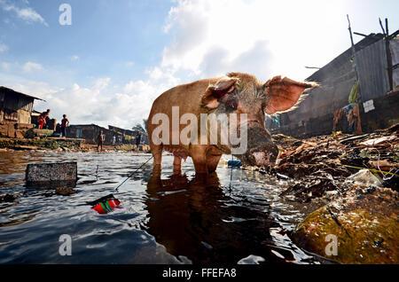 Kroo Bay, Freetown, Sierra Leone - Stock Image