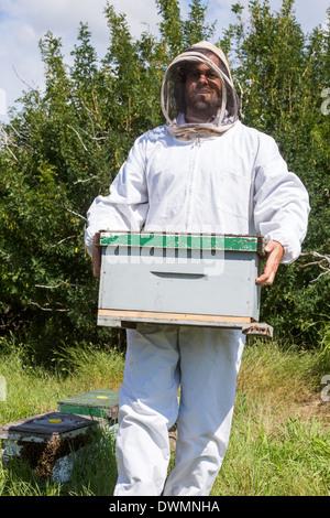 Male Beekeeper Carrying Honeycomb Box - Stock Image