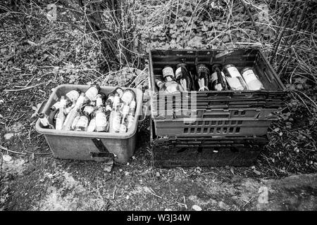 Trays of empty beer bottles waiting to be collected by the recycling truck, Medstead, Hampshire, England, United Kingdom. - Stock Image