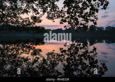 Tranquil silhouette reflection of trees in placid sunset lake, Luetjensee, Germany - Stock Image