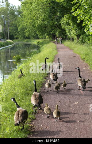 Delaware Canal State Park tow path, New Hope, PA, USA - Stock Image