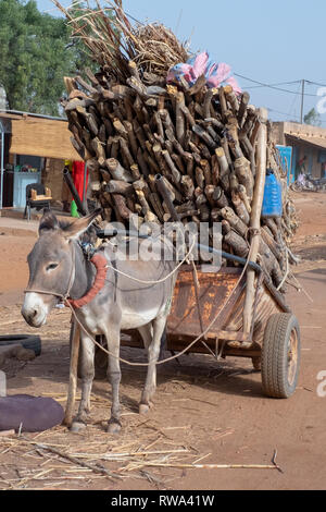 A donkey cart piled high with firewood stands on the side of the road in Ouagadougou, the capital of Burkina Faso - Stock Image
