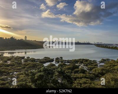 Auckland,  New Zealand - Stock Image