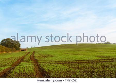 Farmland near Pitsea in Autumn, taken in England - Stock Image