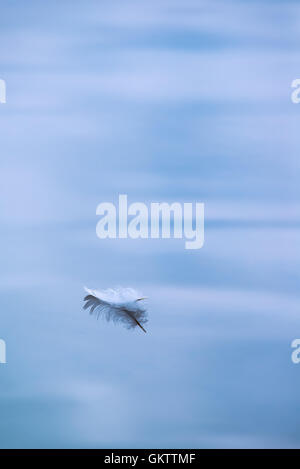 Single feather floating in water - Stock Image