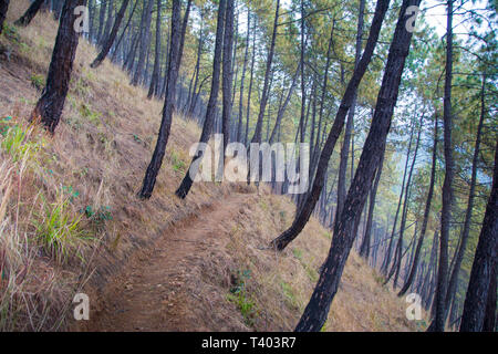 Trekking path in middle of forest tree - Stock Image