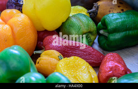 Macro closeup of brightly colored red, yellow and green organic homegrown peppers in natural sunlight - Stock Image
