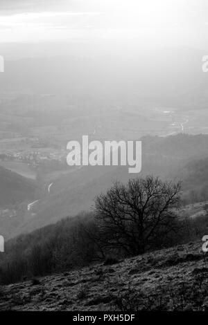 A lonely tree on a mountain cliff, with others mountains and mist on the background - Stock Image