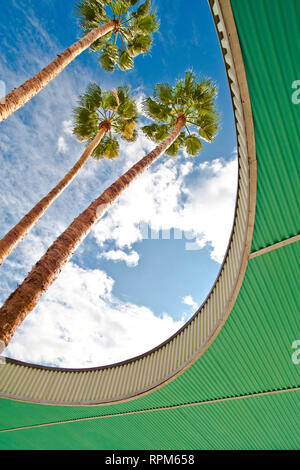 Palm Trees Through Architecture - Stock Image