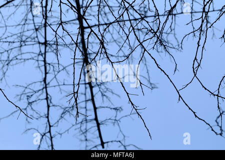 Silhouette of Branches with Blue Sky Background. - Stock Image