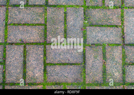 Pathway bricks in a pattern with moss growing in between. - Stock Image