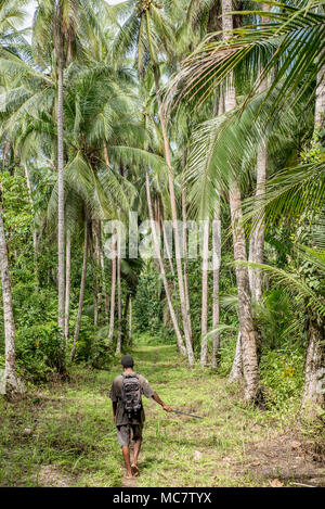 A path in the rainforest among high palm trees, Mushu Island, Papua New Guinea - Stock Image