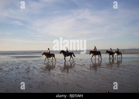 A party of horse riders ride along the edge of the sea at sunset, Deauville, France. - Stock Image
