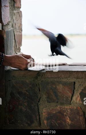 Hand feeding bird - Stock Image