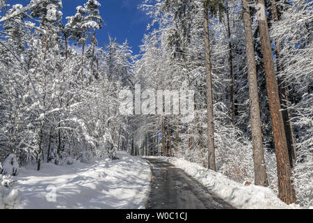 Road through a forest in winter - Stock Image