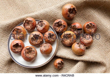 Mespilus germanica - also known as Medlar Fruit - Stock Image