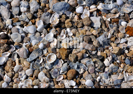 Shells on beach - Stock Image