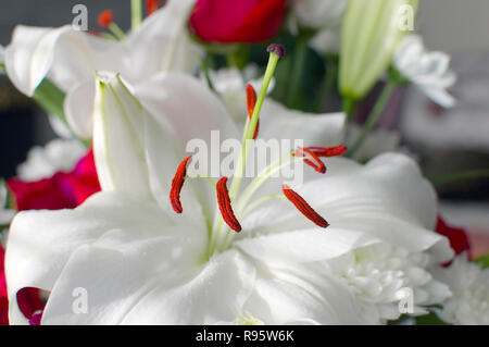 White Lily - Stock Image