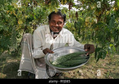 BANGLADESH Farmer harvesting vegetables, Kumargati village, Mymensingh region photo by Sean Sprague - Stock Image