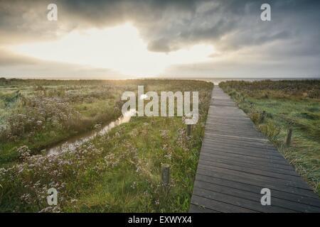 Salt marshes, Sylt, Schleswig-Holstein, Germany, Europe - Stock Image