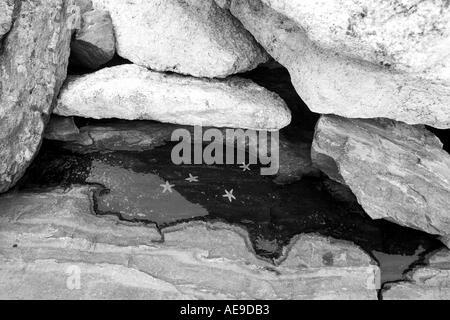 Starfish pool on the Maine coast - Stock Image