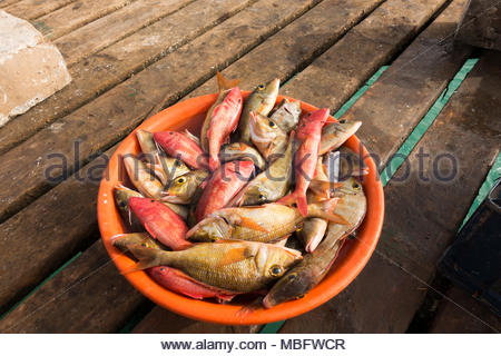 freshly caught fish in a bowl waiting to be sold, the pier, Santa Maria, Sal, Cape Verde. each day fresh fish is sold on the wooden pier - Stock Image