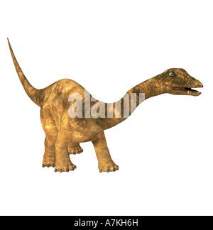 Diplodocus  dinosaur - Stock Image