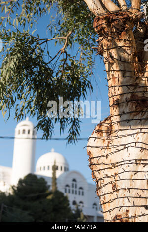 Olive tree wrapped with small electric lights for evening in front of an Orthodox Catholic Church and blue sky. Glyfada, East Attica, Greece. - Stock Image