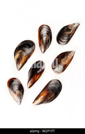 Raw mussels, shot from the top on a white background with a place for text - Stock Image