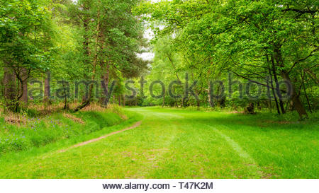 Windsor Great Park in spring with fresh growth showing through on plants and trees - Stock Image
