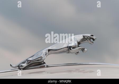 Jaguar Car Marque - Stock Image