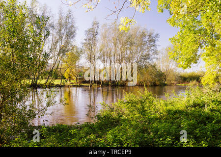 River Suir landscape in Tikincor near Clonmel in County Tipperary,Ireland. - Stock Image