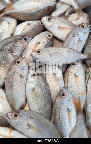 Fresh fish on display for sale on market stall at old street market - Mercado -  in Ortigia, Syracuse, Sicily - Stock Image
