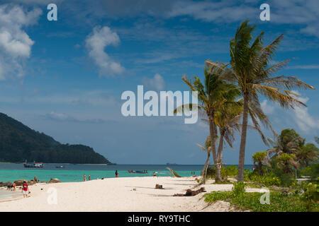 Palm tree on Sunrise beach, Ko Lipe, Thailand - Stock Image