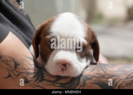 Dog Puppies at the shelter looking for family - Stock Image